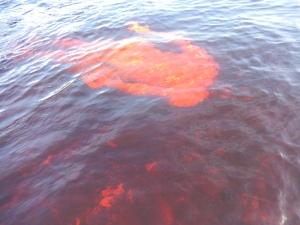 El color de la piel cambia bajo el agua del caño San Joaquín. Foto: Juan Uribe