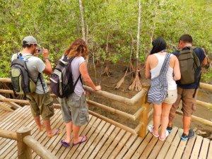 En el Parque Nacional Natural Ensenada de Utría, en el Chocó, se pueden apreciar mangles. Foto: Juan Uribe